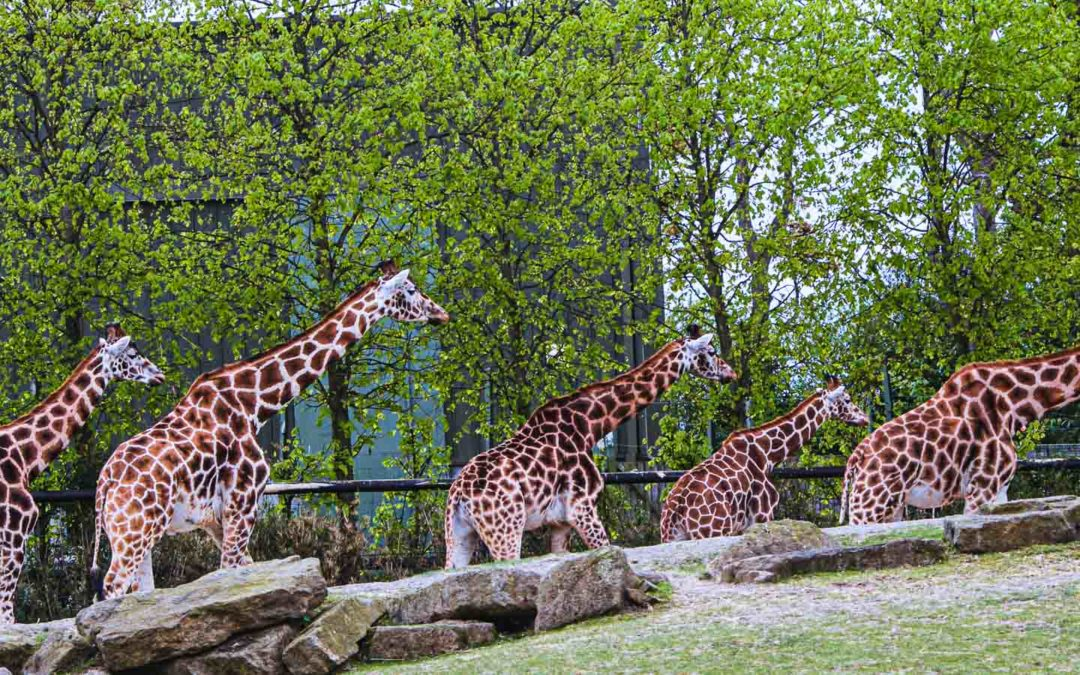 Dublin Zoo, one of the most popular attractions to go