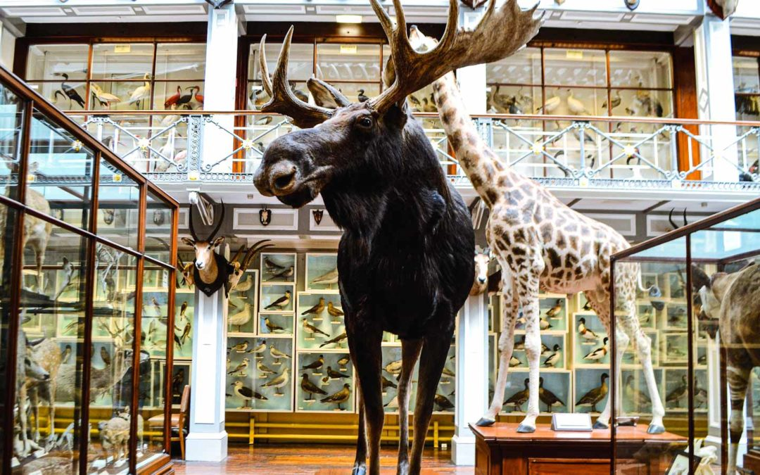 Natural History Museum – National Museum of Ireland